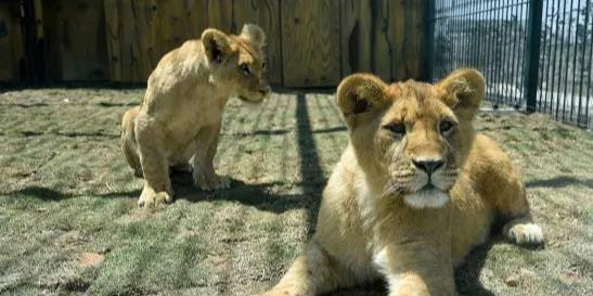 五一小长假台州湾野生动物园开园(多图)