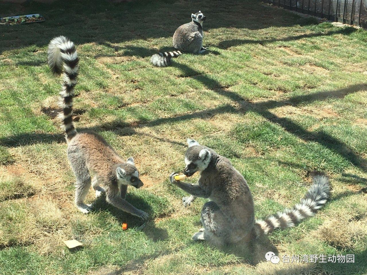 五一小长假首日,台州湾野生动物园开园(多图)