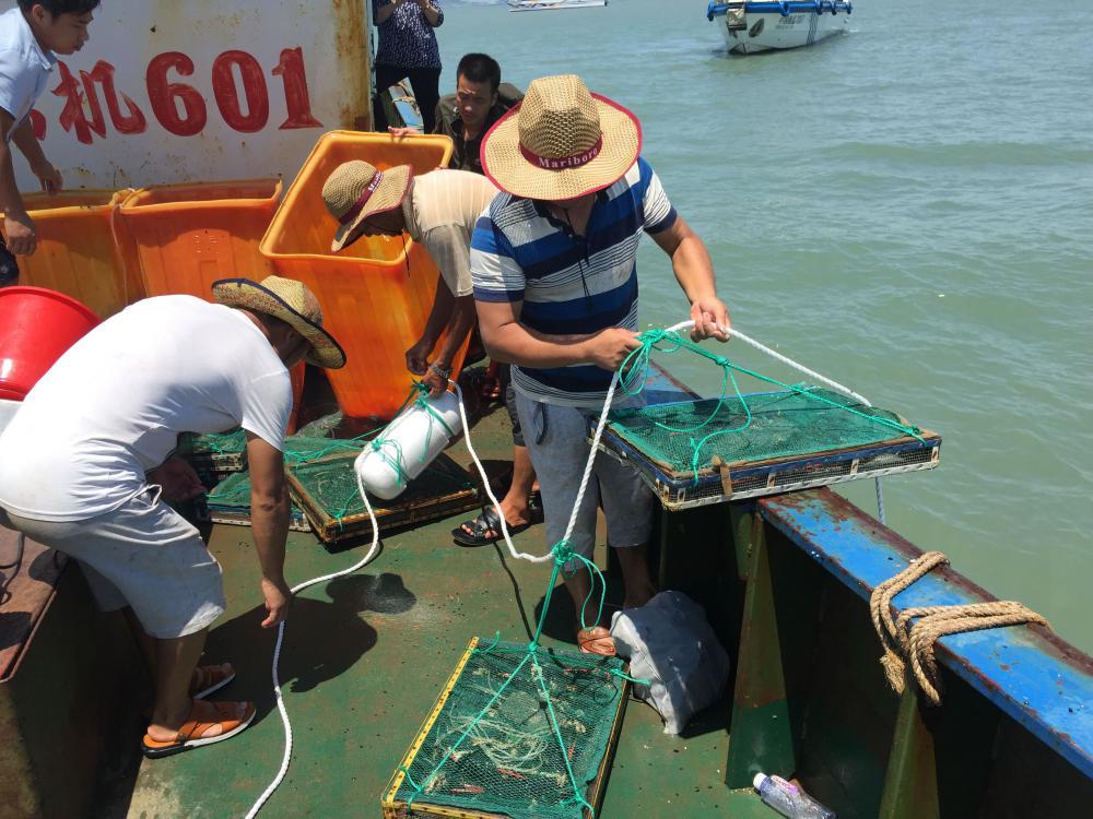 今天(7月21日)上午,台州市海洋与渔业局组织相关人员在大陈岛海域